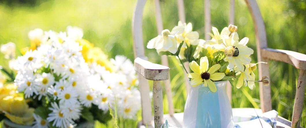 daisy-summer