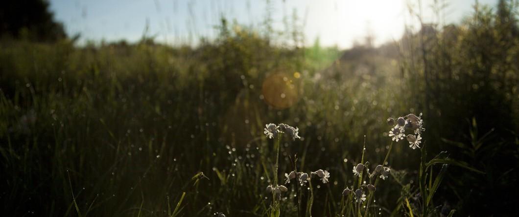 landscape-nature-sunny-flowers