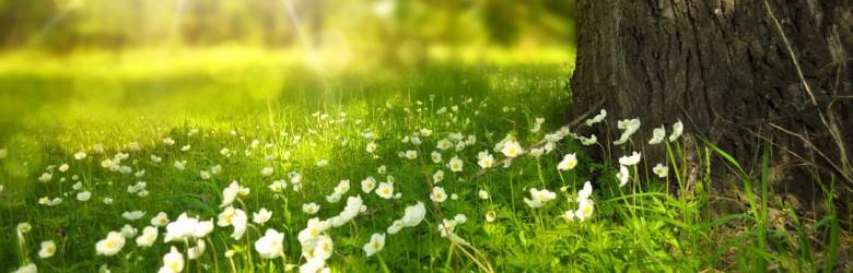 grass-flowers