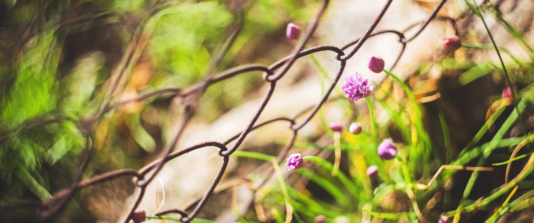 flowers-fence