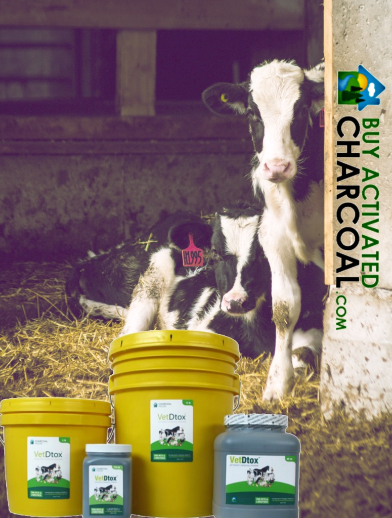 calves detox 775x1024 - Using Activated Charcoal For Scours