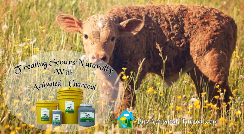 header calf scours naturally activated charcoal blog post 1024x564 - Using Activated Charcoal For Scours