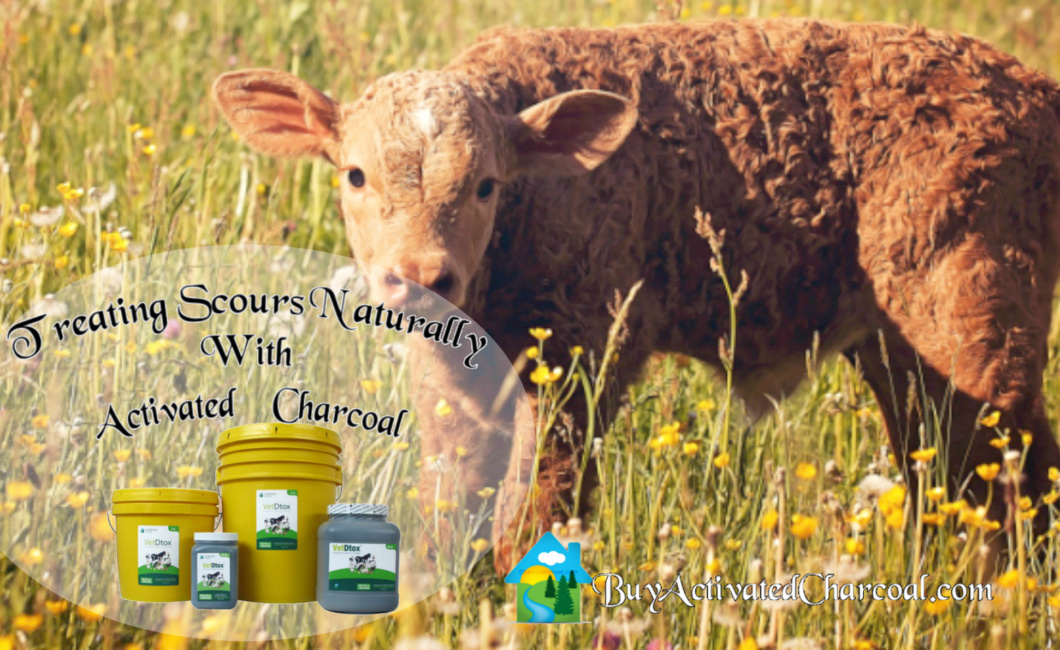 header calf scours naturally activated charcoal blog post 1060x650 - Using Activated Charcoal For Scours