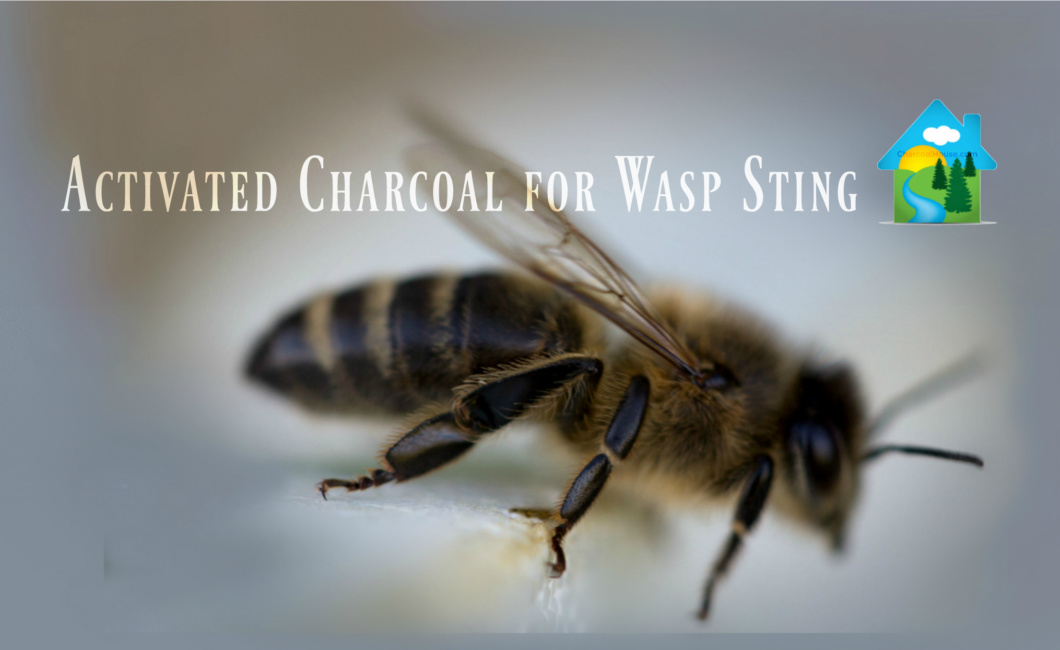 header 2 Charcoal Salve Stick for Wasp Sting in 7 month old 1060x650 - Charcoal Salve Stick for Wasp Sting in 7 month old