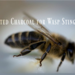 header 2 Charcoal Salve Stick for Wasp Sting in 7 month old 150x150 - Charcoal Salve Stick for Wasp Sting in 7 month old
