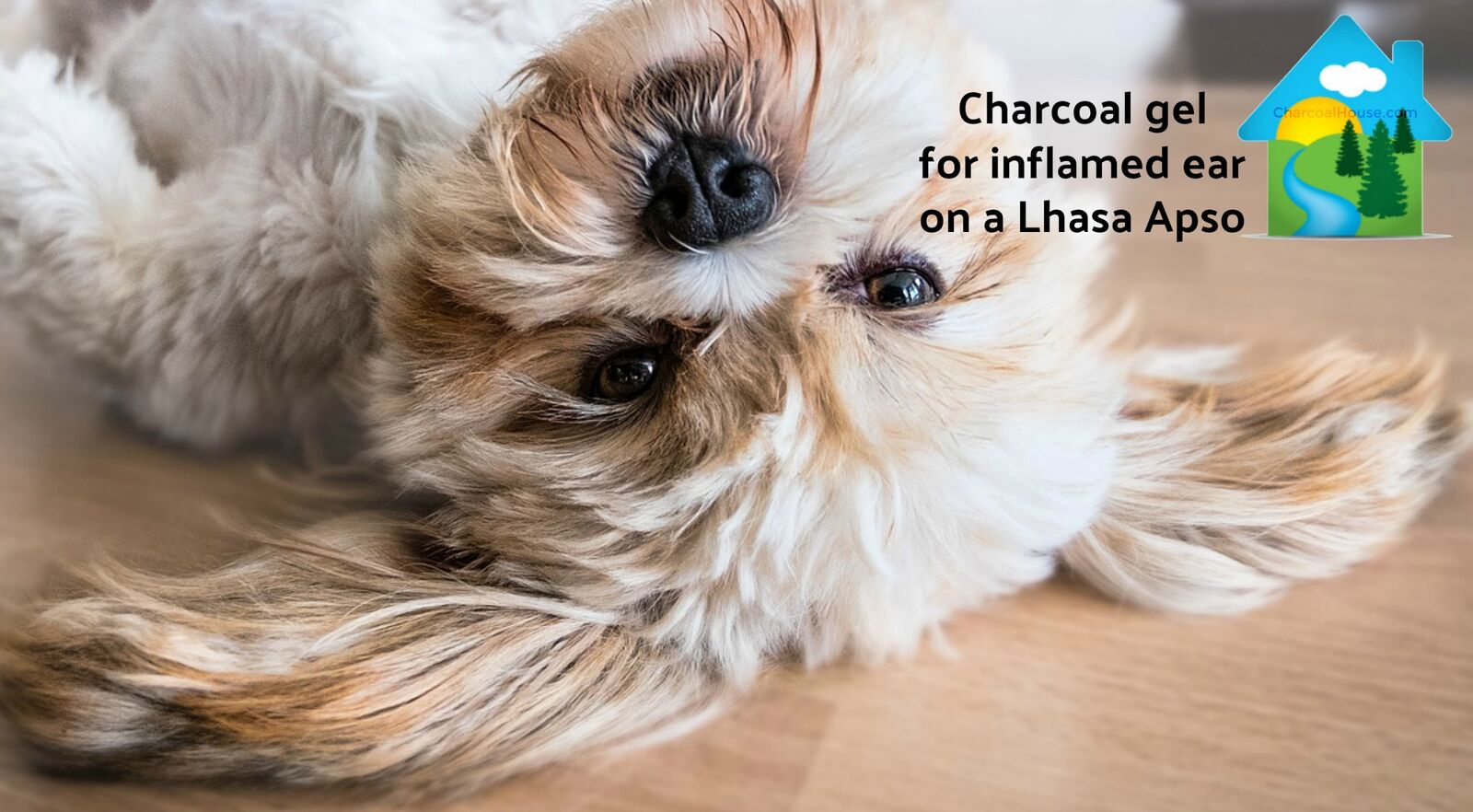 Charcoal for inflamed ear on dog header - Can Charcoal Help Inflamed Dog Ear?