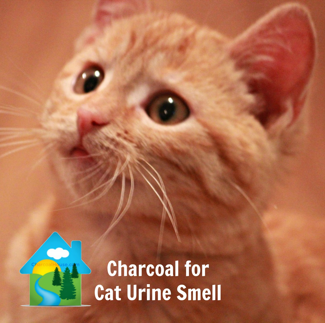 charcoal for cat urine smell - Charcoal for Cat Urine Smell