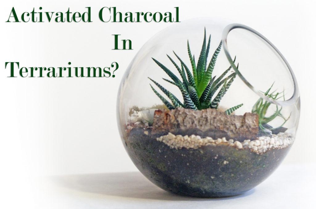 Terrariums for web 1024x680 - Charcoal in Terrariums