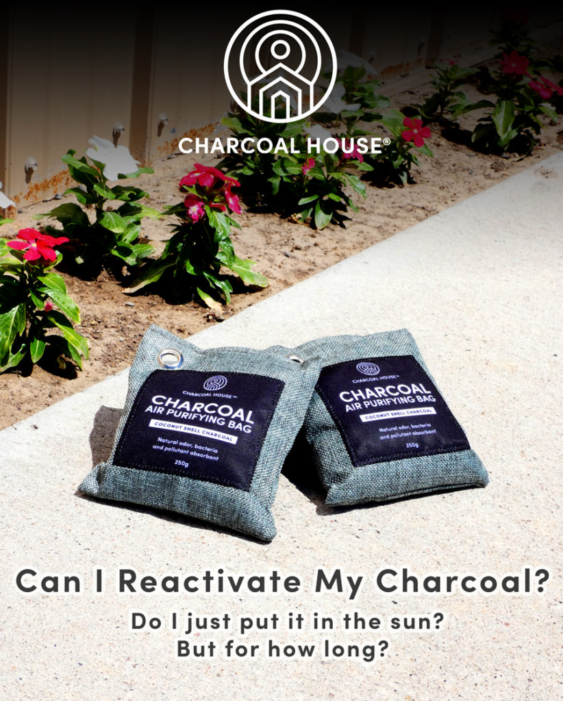 Purifer Bags In sun 822x1024 - Can I Reactivate My Charcoal? Do I just put it in the sun, but for how long?