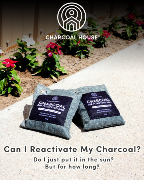 Purifer Bags In sun e1595350615504 - Can I Reactivate My Charcoal? Do I just put it in the sun, but for how long?